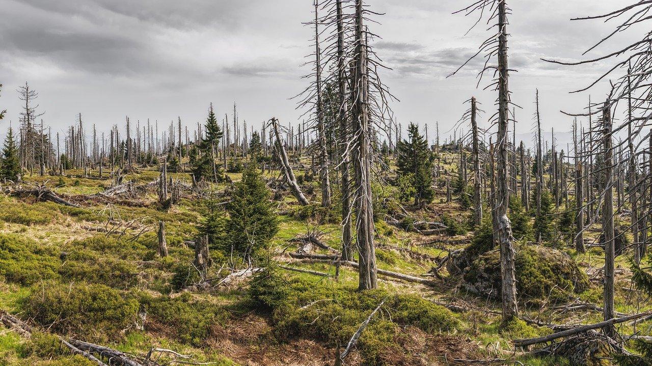 Zmiany klimatu. Ryzyka i zagrożenia. Czy dostosowanie do zmian klimatu to obowiązek?